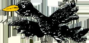 bird trans 300 2